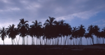 North Shore Palms